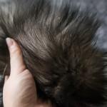 Frisky Fox Tail Butt Plug